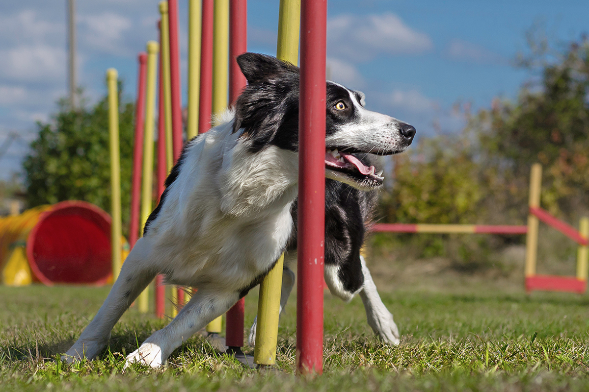 Culture Change—How to Foster Agility